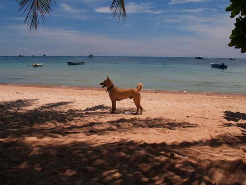 2006年タイ旅。Koh Tao