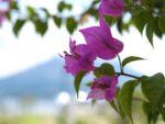 屋久島探訪。2泊3日で世界遺産の島を堪能