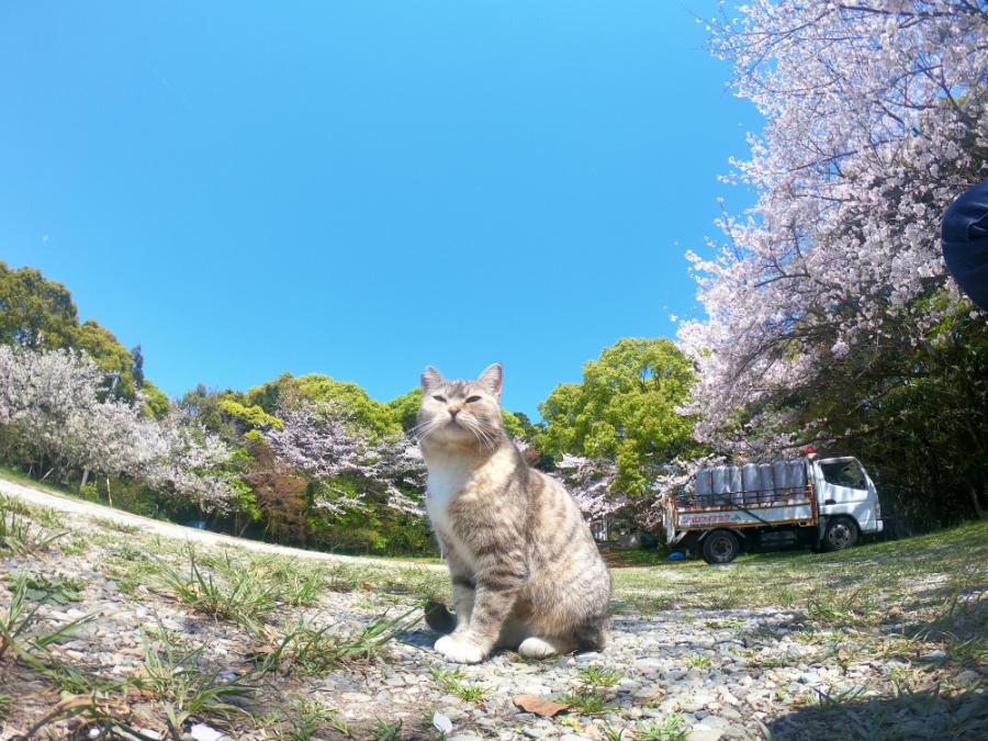 南国市の琴平神社のネコ