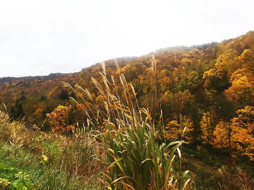 北海道の紅葉の山と曇り空