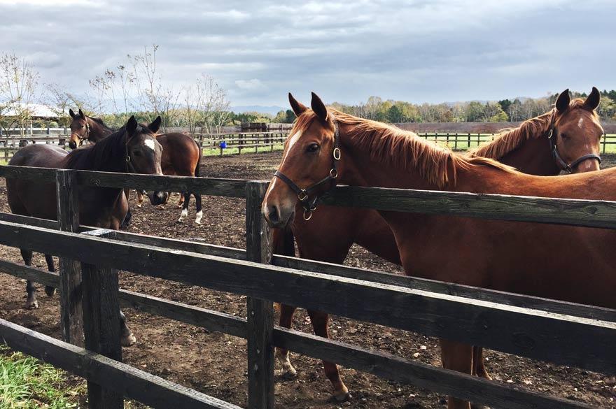 新冠の駿馬たち