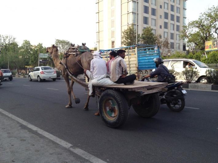 久々のインド。初日はジャイプールの町を歩いて思考停止