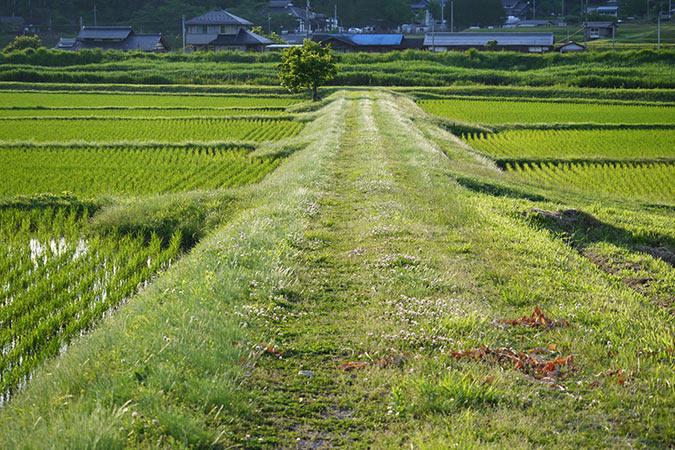 予定は未定!京都吉水の女将と巡る西日本ドライブ旅行