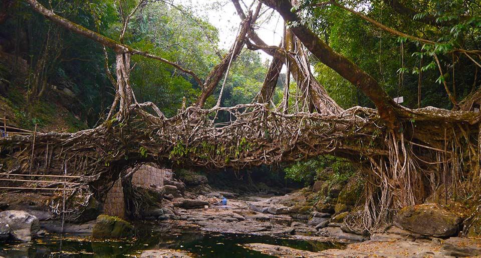 インドの生きてる橋