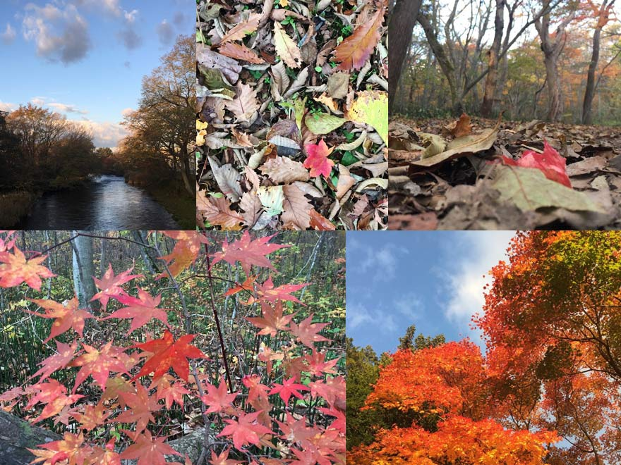 千歳 青葉公園の紅葉