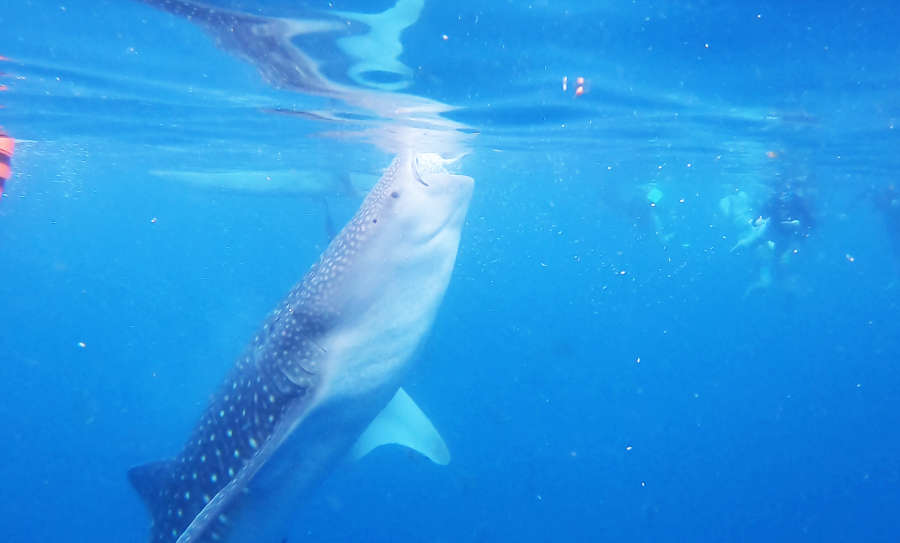 Oslob Whaleshark watching center