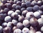 真夏の果実!梅干しとブルーベリー収穫