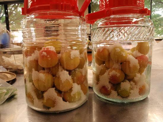 梅干し作りに初挑戦!完熟梅のアマーイ香りが◎
