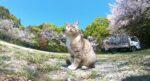 四国で人が少ない観光地をGoPro撮影