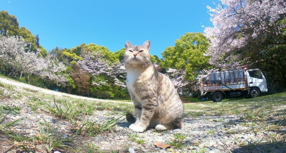【四国】人がいなくなった観光地をGoProスーパーフォトで撮影してきました!(写真36枚)