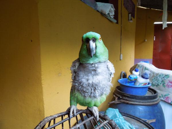 ニカラグアのレオンで語学の先生宅にホームステイ