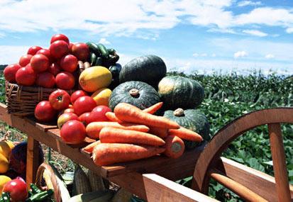 菜食主義になった理由とその効果