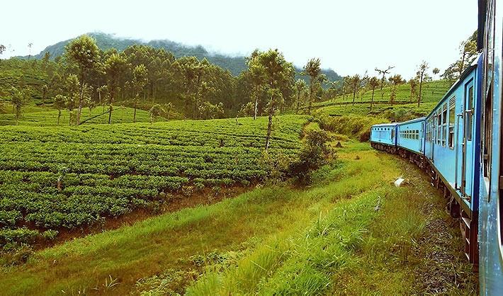 車窓の風景は Best of Asia !  お茶畑を走り抜ける列車に乗ってキャンディからエッラへ