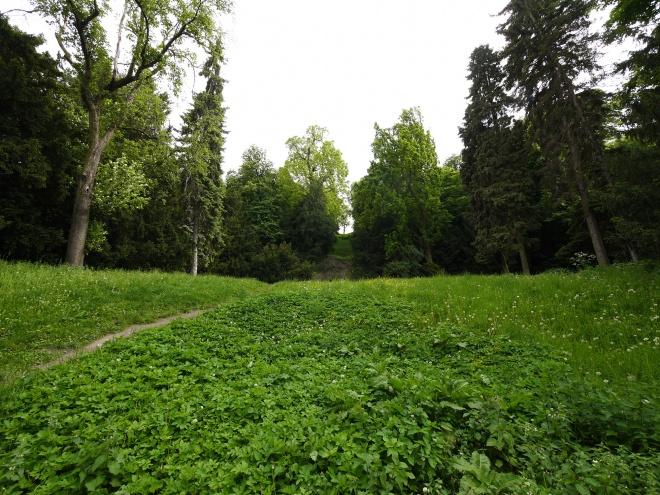 プラハの森
